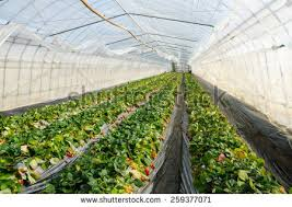 indoor garden stock images royalty free images u0026 vectors