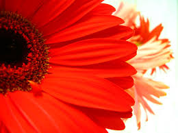 Flowers Colors Meanings - meaning of the color of flowers representative meaning of flowers