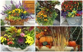 20 fabulous fall container garden ideas garden lovers club