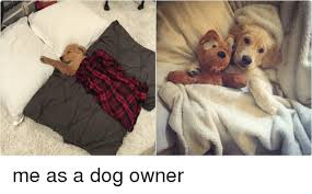 Dog Owner Meme - cartier me as a dog owner dogs meme on me me