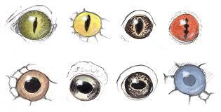 drawing reptile and amphibian eyes john muir laws
