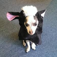 Halloween Costumes Dogs Lil U0027 Stinker Skunk Dog Halloween Costume Shipping