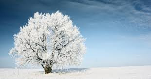 caring for your trees during the winter the woodsman
