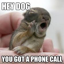 Dog Phone Meme - hey dog you got a phone call informative baby bunny quickmeme