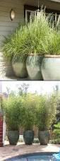 Large Planter Pot by Plants Impressive Plant Decoration Best Large Pots Ideas Home