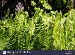 Free Picture Leaf Nature Fern Fern Leaf Nature Background Stock Photo Royalty Free Image