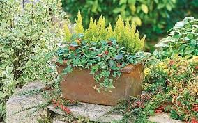 pots for winter colour telegraph