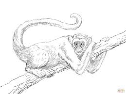 spider monkey coloring page free download