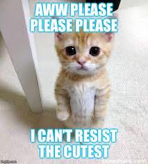 Cutest Memes - cute cat meme imgflip