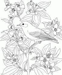 blue bird coloring coloring