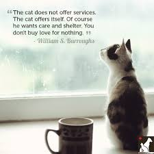 Awesome Quotes About Cats Being - cats quotes and top 10 quotations about cats so hot niceimages org