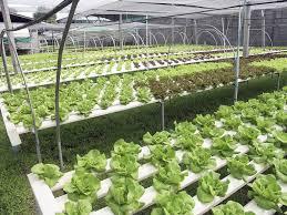 aquaponics vs hydroponics which one is better oct 2017