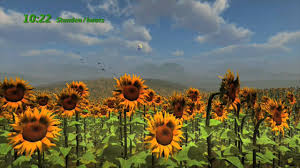 how time flies and sunflowers catch the sun hd youtube