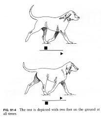 Dog Anatomy Front Leg 91f4 Jpg