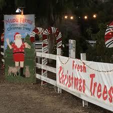 mupu farms christmas tree lot 3710 ojai rd santa paula ca 805