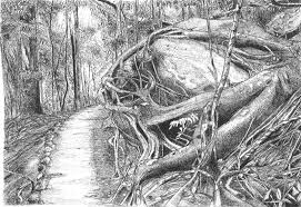 another rainforest drawing archive wetcanvas