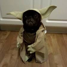 in costumes dogs in costumes dogsincostumes
