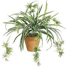 what are some examples of flowering plants that do not reproduce