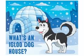 Petmate Indigo What U0027s An Igloo Dog House My First Shiba Inu
