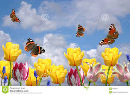 spring flowers and butterflies stock image image 3942597