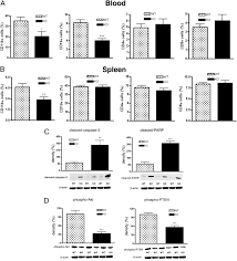 a2b adenosine receptors protect against sepsis induced mortality