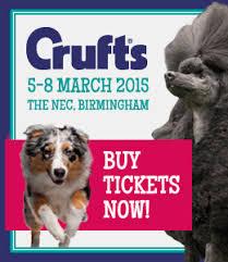 crufts australian shepherd 2014 crufts 2015 seaside shelties