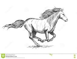 sketch of prancing stallion or horse stock photos image 32078663