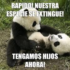 pandas sexo meme by sonicdragon31 memedroid