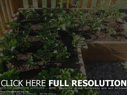 Gardening For Beginners Vegetables by Get 2 16 Large Planters Raised Bed Vegetable Garden For Herb