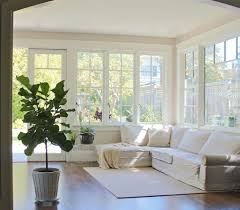living room trees the fig and i my first fiddle leaf fig tree gardenista