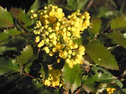 plants native to oregon favorite natives