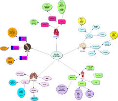 nervous system concept map it 365 h002 summer 2013 systems concept map