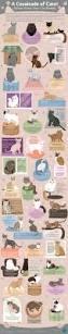 25 best cat colors ideas on pinterest mandala coloring pages