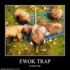 Ewok Memes - must love pekes ewok trap calendars
