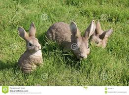 rabbit garden ornaments stock image image of ornament 65346131