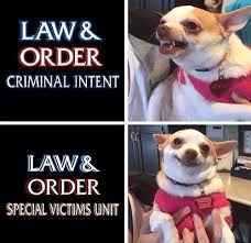 Law Dog Meme - 21 funny posts about law order svu smosh