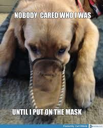 Evil Memes - evil dog memes com puppy litle pups