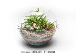 Goldfish In A Vase Succulent Arrangement Glass Vase Terrarium Stock Photo 662629078