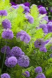 best 25 shade plants ideas on pinterest plants for shade shade