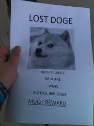 Best Doge Memes - lost doge jpg