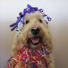 goldendoodle puppy treats 27 best abbi my goldendoodle images on puppies