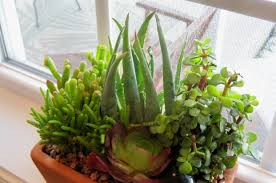 plants that don t need sunlight to grow plant indoor hanging plant stunning cool indoor plants this