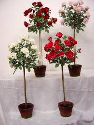 Topiaries Brisbane - topiary rose tree 55