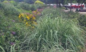 fafardornamental grasses for fall