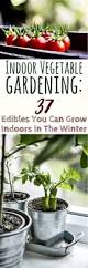 Winter Indoor Garden - 25 trending indoor vegetable gardening ideas on pinterest