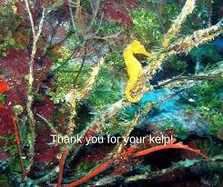 scuba com diving e cards custom animated greeting cards