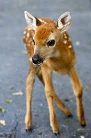 64 best deer images on pinterest animals wild animals and