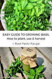 55 best herbs images on pinterest herbs garden garden ideas and