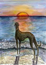 40 best greyhound drawings images on pinterest greyhound art