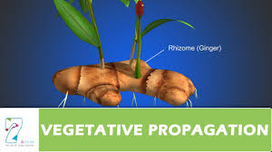 vegetative propagation youtube